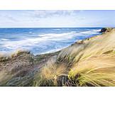 Baltic Sea, Marram Grass, Breezy