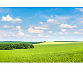 Agriculture, Fields