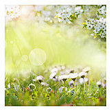 Meadow, Spring, Daisy, Bright