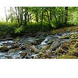Nature, River, Torrent, Urft