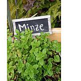Mint, Fresh mint
