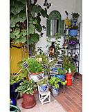 Culinary herbs, Patio, Herb garden