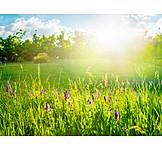 Meadow, Summer, Flower Meadow