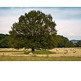 Tree, Agriculture, Rural Scene, Harvest
