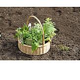 Garten, Gartenarbeit, Gartenkräuter, Küchenkräuter