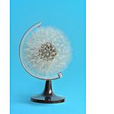 Dandelion, Fragile, Globe