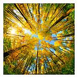 Wald, Herbst, Bäume, Herbstfarben, Aufwärts