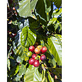 Coffee, Stone Fruit