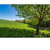 Field, Rural Scene, Spring