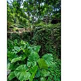 Garten, Yangshuo