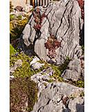 Rock garden, Garden plant