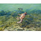 Sea, Fox, Drowned