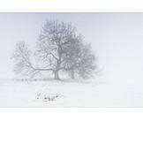 Tree, Winter, Fog