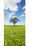 Spring, Tree, Meadow