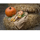 Autumn, Vegetable, Thanksgiving, Harvest