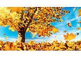 Leaves, Autumn, Wind