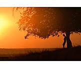 Man, Sunset, Tree, Silhouette