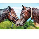 Horses, Friends