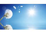 Water, Dandelion, Sunbeams