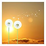 Dandelion, Seed, Fly Away