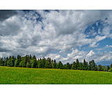 Meadow, Forest, Clouds