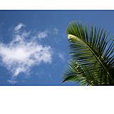 Sky, Palm Leaf