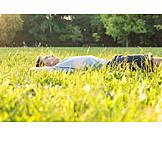 Meadow, Lying, Relax