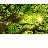 Sunbeams, Tree, Foliage