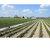 Agriculture, Outbuilding, Strawberry Plant