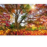 Tree, Autumn Leaves, Autumn