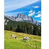 Cows, Pastures, Litzlalm