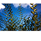 Sky, Twig, Bush