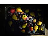 Fruit, Harvest