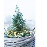 Winter, Christmas Lights, Christmas Tree