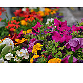 Flowers, Flowers Bloom, Flower Bed