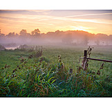 Sunrise, Meadow, Sunrise, Morning Fog