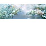 Winter, Christmas, Frost, Fir Branch
