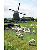Cows, Windmill, Sheep