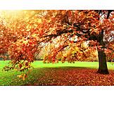 Park, Fall Colors, Tree