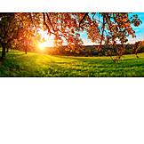 Sunlight, Meadow, Autumn