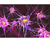 Science, Nervous System, Microscopic