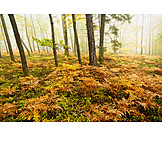 Fall colors, Deciduous forest, Fern