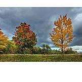 Autumn Leaves, Tree, Autumn Colors