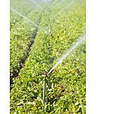 Landwirtschaft, Bewässerung, Bewässerungsanlage