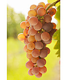 Fruits, Red, Reif, Grapes