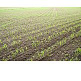 Feld, Landwirtschaft, Ackerbau