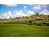 Feld, Landwirtschaft, Madagaskar