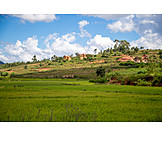 Field, Agriculture, Madagascar
