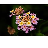 Tropical, Flower