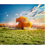 Meadow, Tree, Morning Light